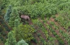 """Cảnh quay hiếm có về cuộc """"trò chuyện"""" của hai chú voi"""
