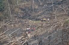 [Photo] Báo động thực trạng phá rừng tái sinh ở huyện biên giới Nậm Pồ