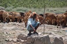 Nguy cơ xảy ra nhiều đợt nắng nóng chết người ở khu vực Nam Á