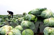 Tiêu thụ nông sản trong tình huống khẩn cấp: Hệ quả từ đối lập tư duy