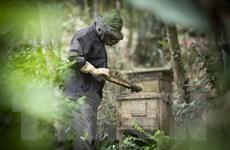 [Photo] Triển vọng phát triển nghề nuôi ong lấy mật ở Hòa Bình