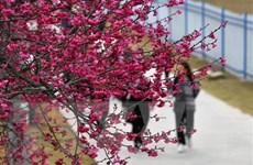 Trung Quốc tăng phòng dịch nghiêm ngặt tại các địa điểm du lịch