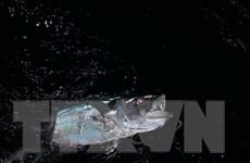 [Photo] Trải nghiệm thú vị khi săn cá đêm trên biển Trường Sa