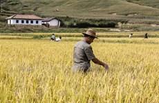 Triều Tiên đối mặt với tình trạng thiếu lương thực trầm trọng