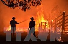 Cháy rừng tại Australia là ví dụ về rủi ro an ninh do biến đổi khí hậu