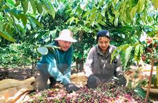 """Doanh nghiệp có thể """"đặt hàng"""" vùng nguyên liệu nông sản"""