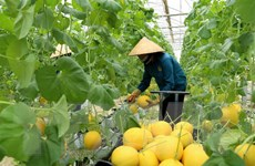 Australia tăng hỗ trợ Việt Nam phát triển nông nghiệp công nghệ cao