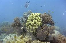 Rạn san hô Great Barrier thoát danh sách di sản nguy cấp của UNESCO