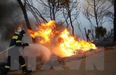 Cháy rừng hoành hành ở Bulgaria, Thổ Nhĩ Kỳ, Hy Lạp, 10 người tử vong