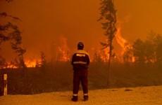 Tổng thống Nga yêu cầu tăng lực lượng khống chế cháy rừng ở Siberia