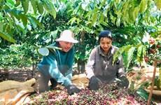 Kết nối tiêu thụ và xuất khẩu nông-thủy sản sang Algeria và Senegal