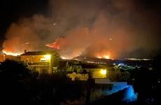 Cháy rừng tại nhiều nơi ở Tây Ban Nha, thiêu rụi 5.000ha đất rừng