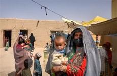 Kinh tế Afghanistan đứng bên bờ vực, phần lớn dân số vào cảnh bần cùng