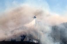 Các đám cháy rừng lại bùng phát trên đảo Evia của Hy Lạp