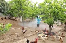 Phòng chống dịch bệnh trên động vật trong thời điểm cuối năm