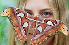 """[Photo] Những khoảnh khắc """"tạo dáng"""" ấn tượng nhất về động vật"""