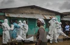 WHO quyết tâm kiểm soát và tiêu diệt căn bệnh chết người Ebola