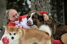 [Photo] Phút đời thường của Tổng thống Nga Vladimir Putin
