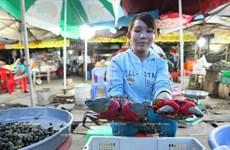 [Photo] Ghé thăm bãi biển hoang sơ và dài nhất tỉnh Trà Vinh