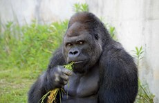 [Photo] Chú khỉ khiến các cô gái Nhật phát sốt ra mắt album ảnh
