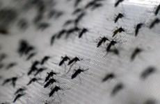 Mexico chính thức lưu hành vắcxin Dengvaxia phòng sốt xuất huyết