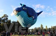 """[Photo] Trẻ nhỏ nô nức tới """"thổi bóng"""" khinh khí cầu ở Canberra"""