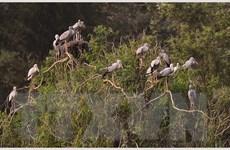 """[Photo] """"Đổi gió"""" với hành trình khám phá vườn chim Thung Nham"""