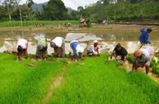 Myanmar đặt mục tiêu xuất khẩu 2 triệu tấn gạo trong tài khóa 2016
