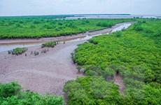 [Photo] Trải nghiệm vẻ hoang sơ của sông nước ngập mặn ngay gần Thủ đô