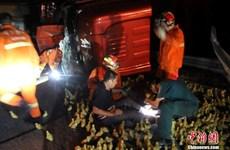 [Photo] Phân luồng giao thông cho đàn vịt để giải cứu tài xế bị nạn