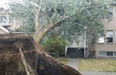 Hàng chục nghìn hộ gia đình ở Canada mất điện vì bão lớn