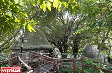 """Trải nghiệm khu nghỉ dưỡng nhà trên cây """"độc nhất vô nhị"""" ở Hà Nội"""
