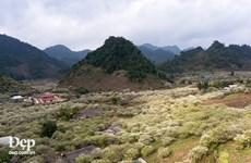 [Photo] Nhanh chóng lên Mộc Châu để chụp ảnh trăm hoa đua nở
