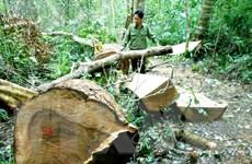 Khởi tố 9 bị can về tội phá rừng phòng hộ ở Bình Định