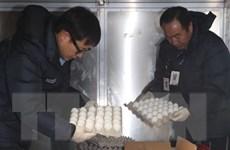 Hàn Quốc nhập khẩu 100 tấn trứng do thiếu hàng vì cúm gia cầm