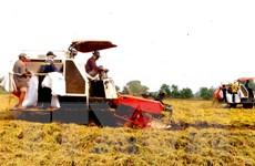 Đầu tư hơn 300 triệu USD để canh tác bền vững cho lúa gạo và càphê