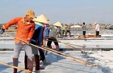 [Photo] Diêm dân Bình Thuận vào cao điểm thu hoạch vụ muối chính
