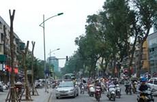 [Video] Cải tạo cây xanh và câu chuyện quản lý đô thị tại Hà Nội