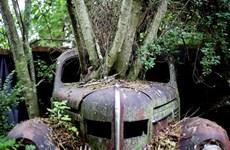[Photo] Khám phá khu rừng trưng bày nhiều chiếc xe cổ cực chất