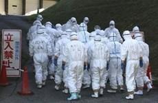 Nhật Bản phát hiện ổ dịch cúm gia cầm có khả năng lây nhiễm cao