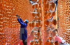 [Photo] Chiêm ngưỡng mùa hồng vàng trĩu quả tại Trung Quốc