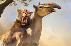 Bán đấu giá bộ xương hổ răng kiếm hóa thạch 37 triệu năm tuổi