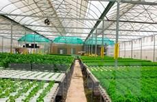 FAO khởi động Năm Quốc tế về rau và trái cây 2021
