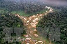 Brazil thu giữ khối lượng gỗ lậu lớn kỷ lục tại khu vực Amazon
