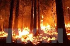 Biến đổi khí hậu: Thiên tai trong năm 2020 gây thiệt hại nặng nề