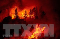 Cháy rừng vượt tầm kiểm soát, đe dọa người dân bang Tây Australia