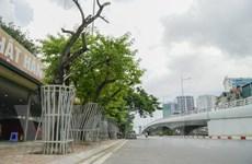 Nhiều cây sưa đỏ ở Hà Nội chết khô: Cần xem xét trách nhiệm để xử lý