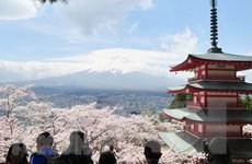 Tạm gác nỗi lo dịch bệnh, người dân Tokyo đổ xô đi ngắm hoa anh đào