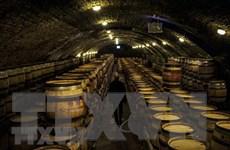 Pháp: Tình hình sương giá nghiêm trọng đe dọa sản lượng rượu vang