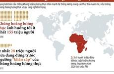 [Infographics] Nguy cơ xảy ra khủng hoảng lương thực toàn cầu